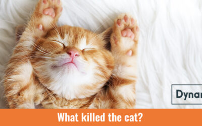 What Killed the Cat?