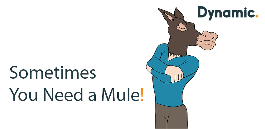 Sometimes You Need a Mule!