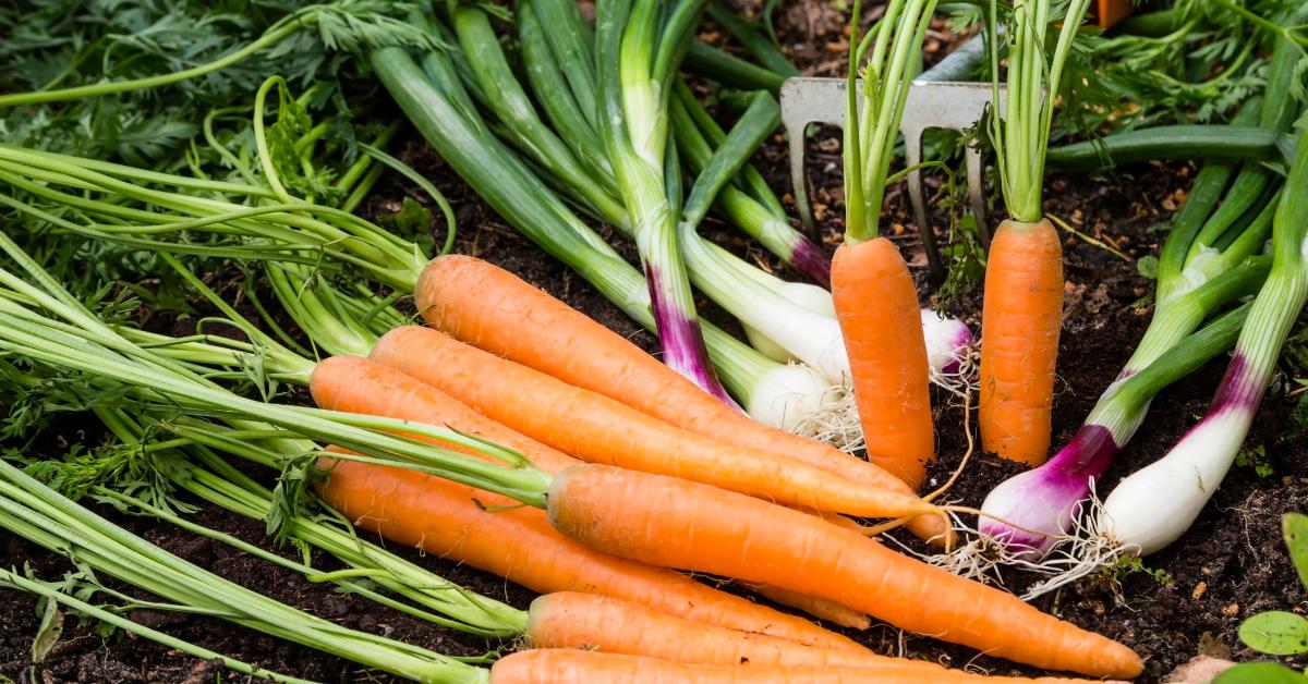 Image for blog - vegetables